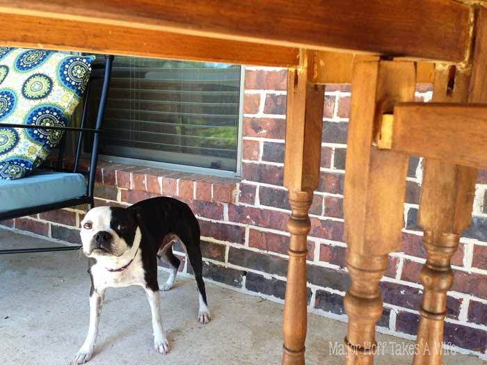 Have a furry friend help you out when repairing furniture