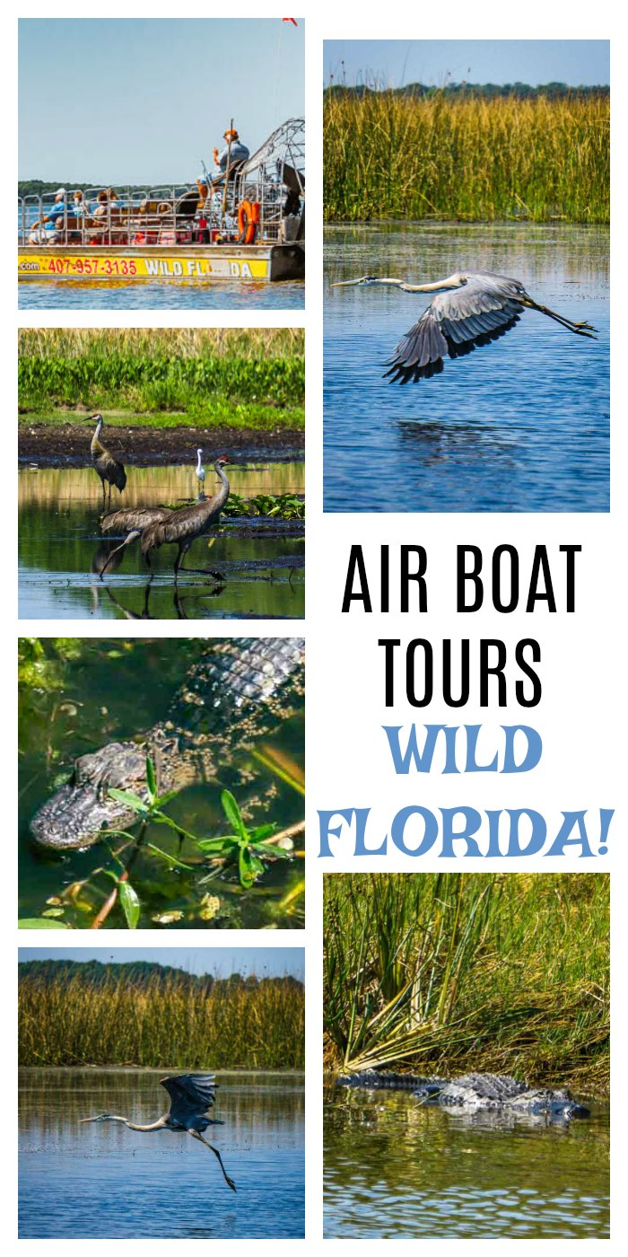 Air-Boat-Tours-Wild-Florida-9.jpg