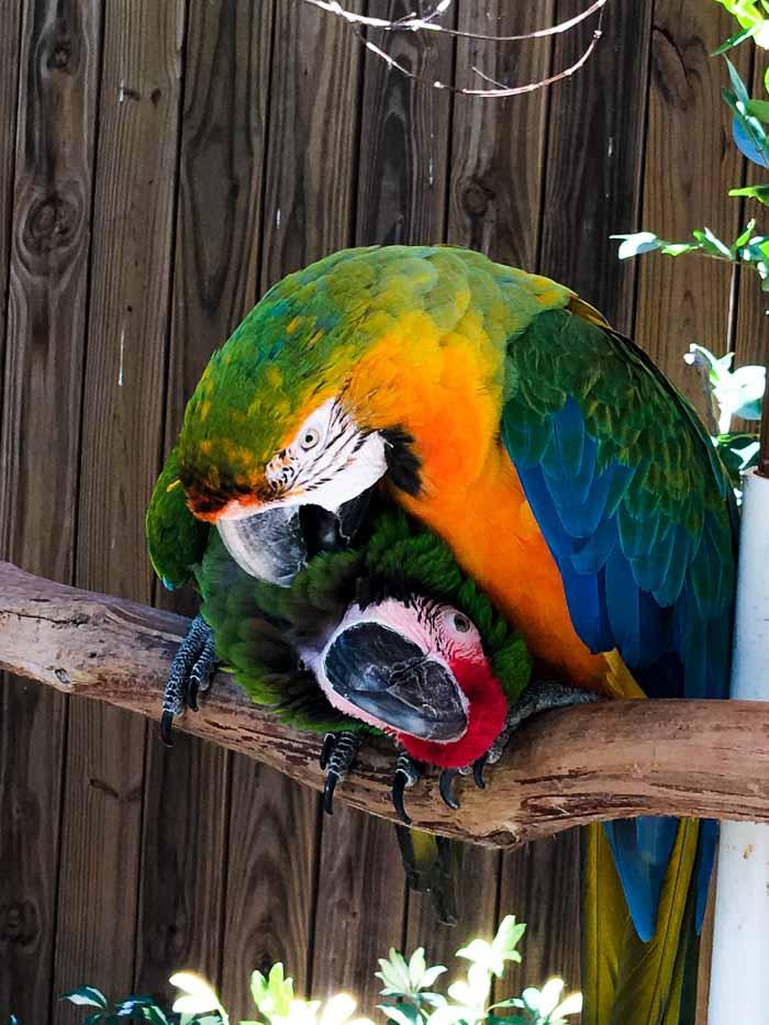 Birds at Wild Florida
