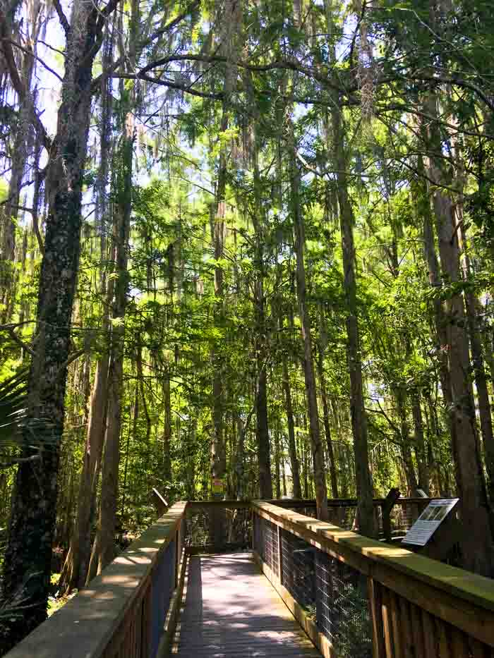 Florida Swamps at Wild Florida as part of things to do in Orlando for a Girls Getaway
