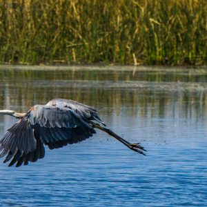 Air Boat Tours With Wild Florida