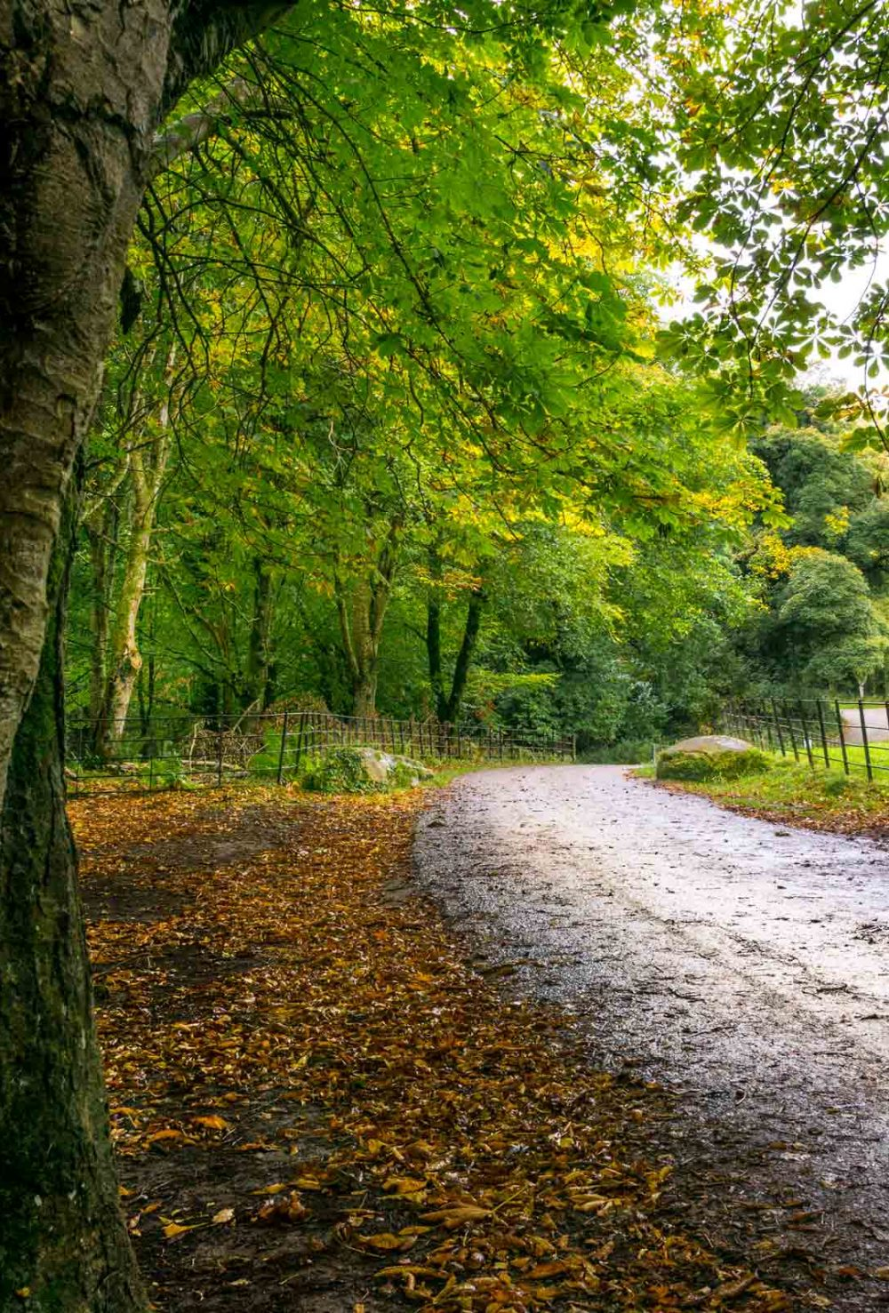 A walk in Killarney National Park leads you to quaint Irish roads.